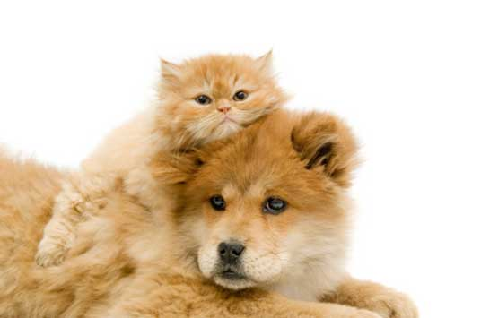 cats-with-dogs-2